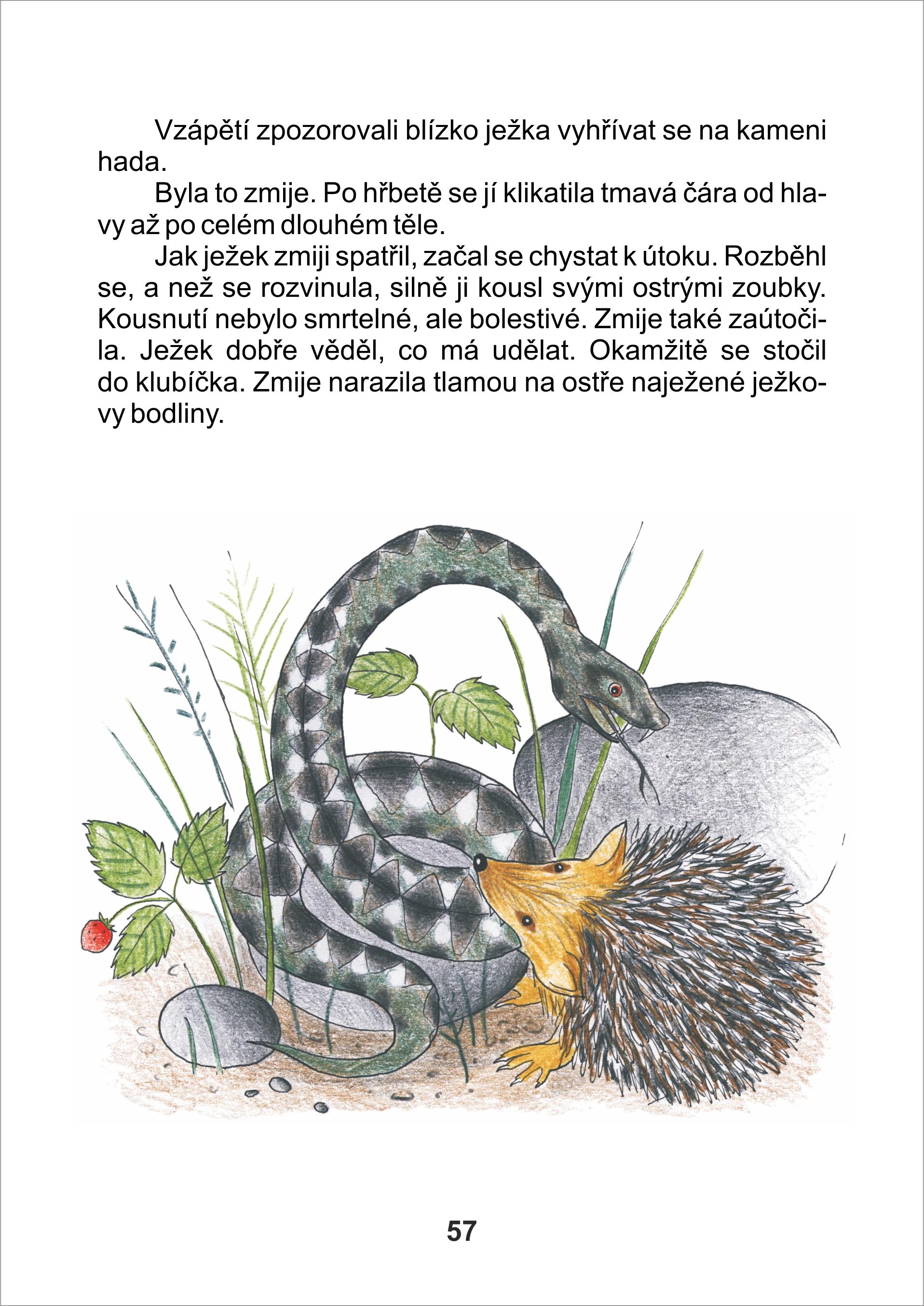 www ukazky Tapka jezek zmije